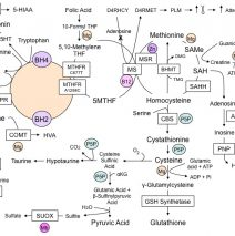 Methylation-Pathways