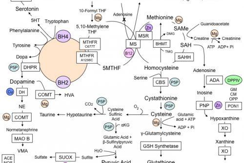 Methylation-Pathways